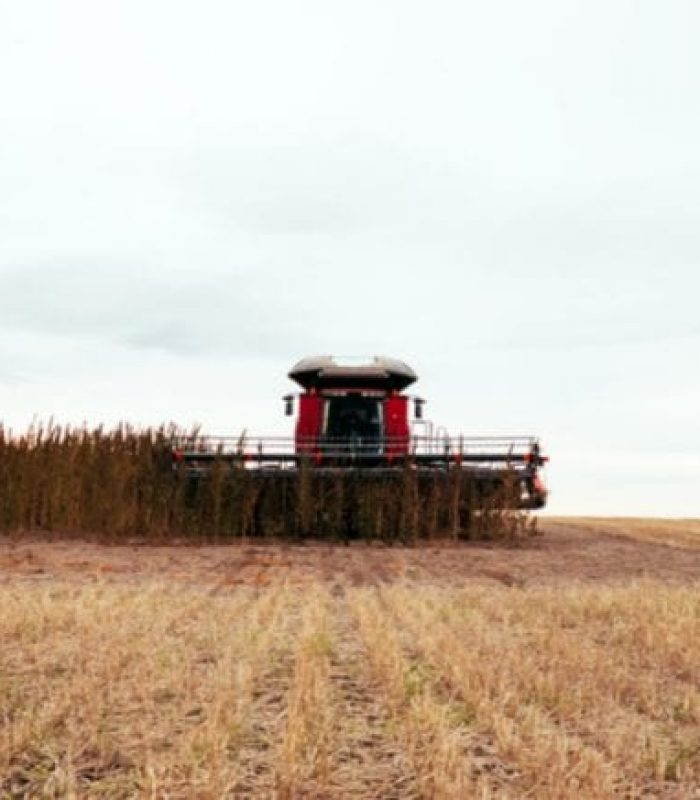 Hemp Legalization in America: Is It Going to Save America's Farmers?