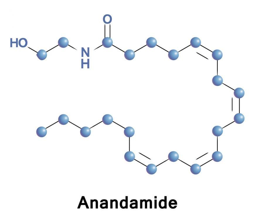 Cannabinoid receptor type