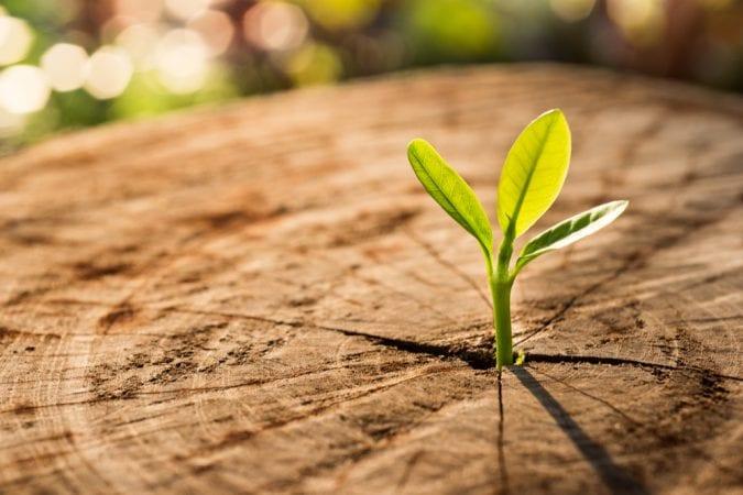 cannabis, medical cannabis, recreational cannabis, co-creators, origins of life, plants, organisms, legalization, growth, Canada, USA