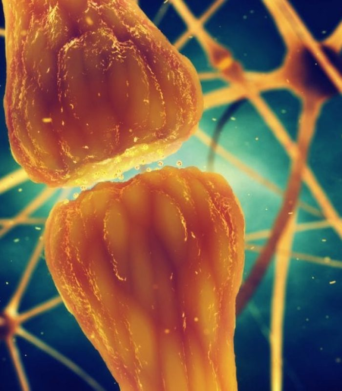 Four Types of Cannabinoid Receptors And How They Work