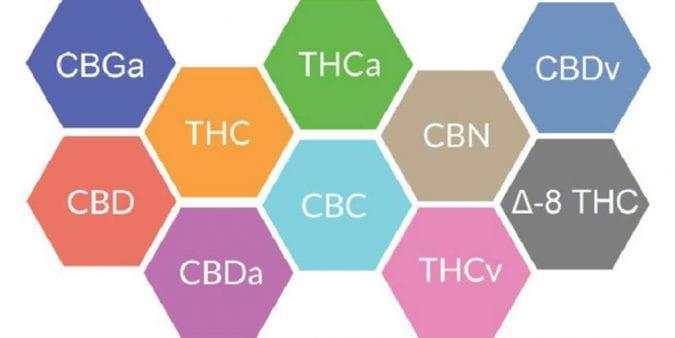 cannabis, cannabinoids, CBD, THC, terpenes, entourage effect, pain, pain relief, opioids, opioid addiction, CBD oil
