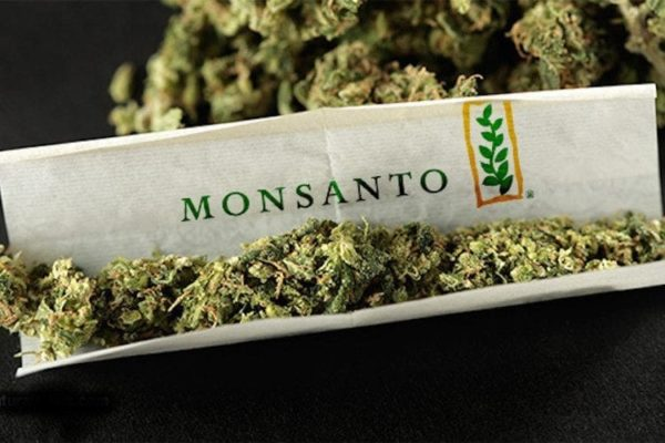 GMO cannabis from Monsanto