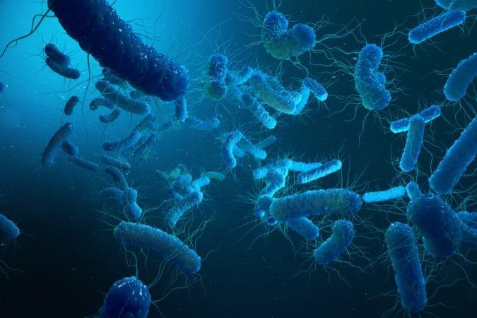 cannabis, medical cannabis, recreational cannabis, Crohn's, gut bacteria, microbiome, enterobacterias, inflammation, anti-inflammatory, cannabinoids, cannabis oil, genetic mutations