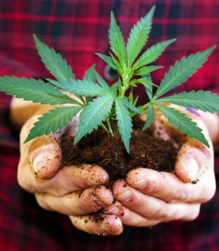 Hemp Laws State to State