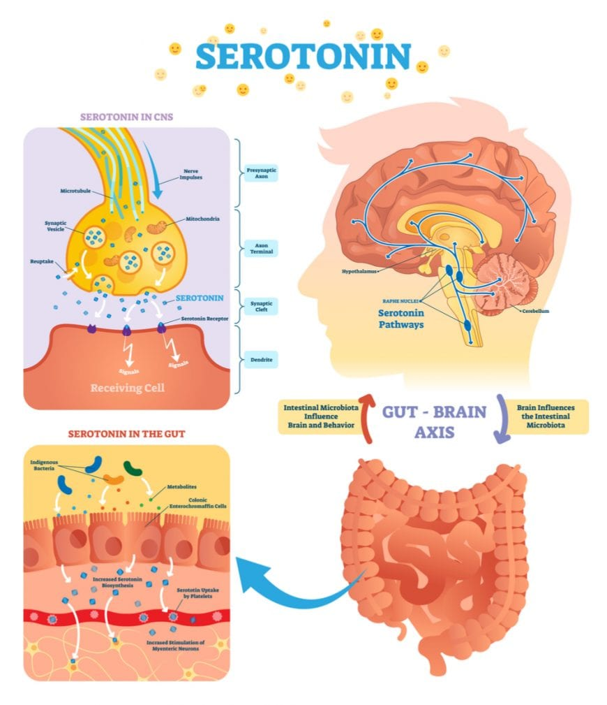 cannabis, medical cannabis, serotonin, serotonin receptors, depression, pregnant women, fetus, hormones, brains