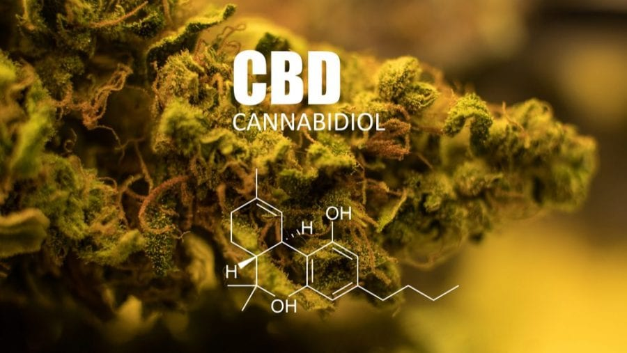 cannabis, cannabis research, prostate cancer, cancer research, USA, legalization, prohibition, cancer cells, cancer treatment, CBD, chemotherapy