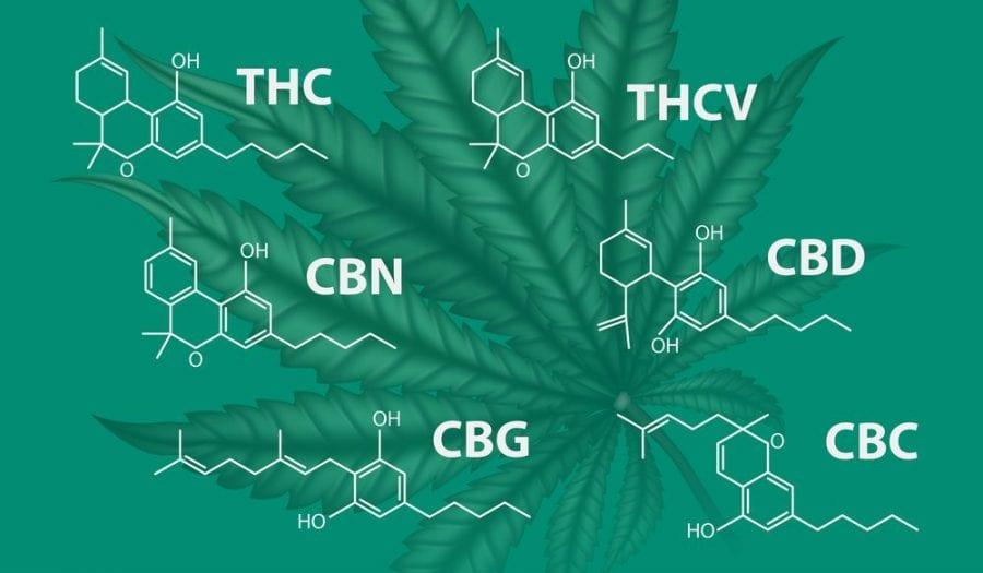 cannabinoids, UBC, research, medical cannabis, cannabis, recreational cannabis, THC, CBD, terpenes, entourage effect, Canada