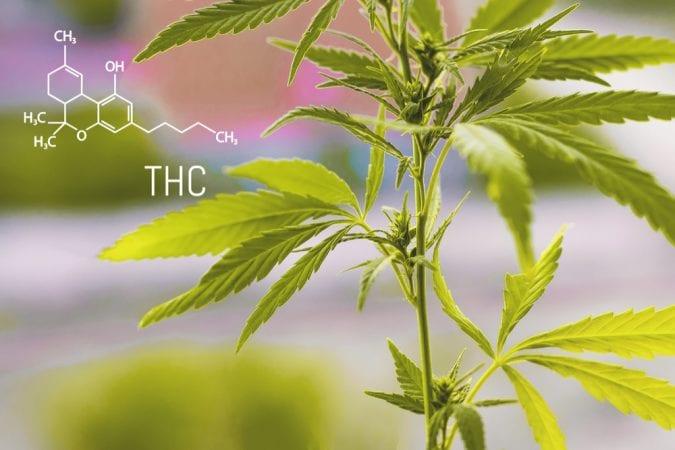 cannabis, THC, CBD, medical cannabis, recreational cannabis, legalization, prescription, treatments