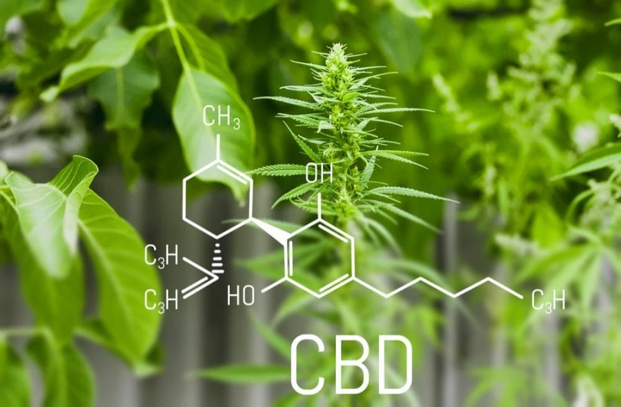CBD, cannabis, THC, cannabinoids, CBD tolerance, epilepsy, seizures, endocannabinoid system, medical cannabis, legalization