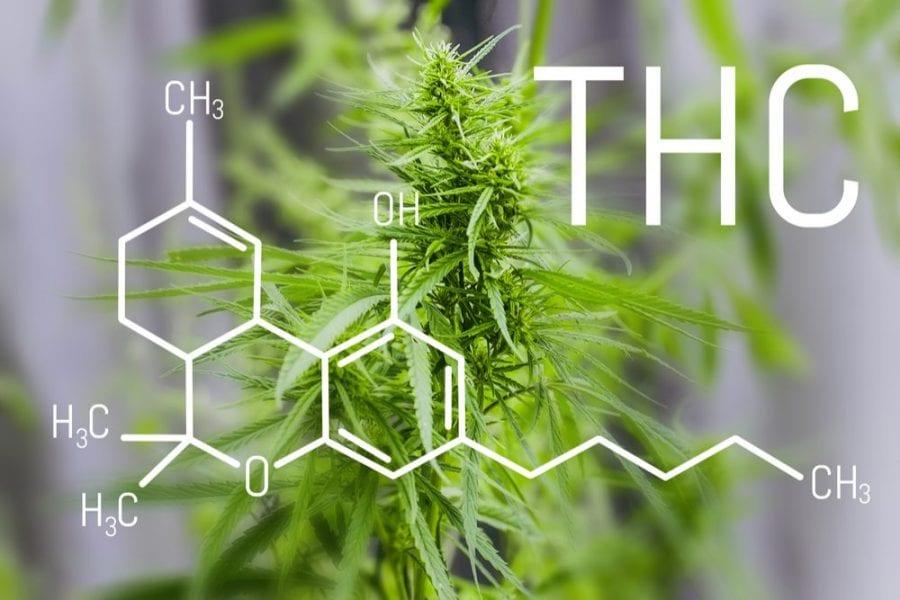 CBD, cannabis, THC, cannabinoidi, tolleranza CBD, epilessia, convulsioni, sistema endocannabinoide, cannabis medica, legalizzazione