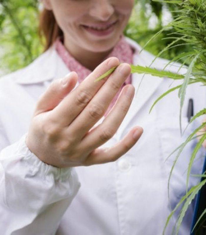 Study Finds 21 New Cannabinoids