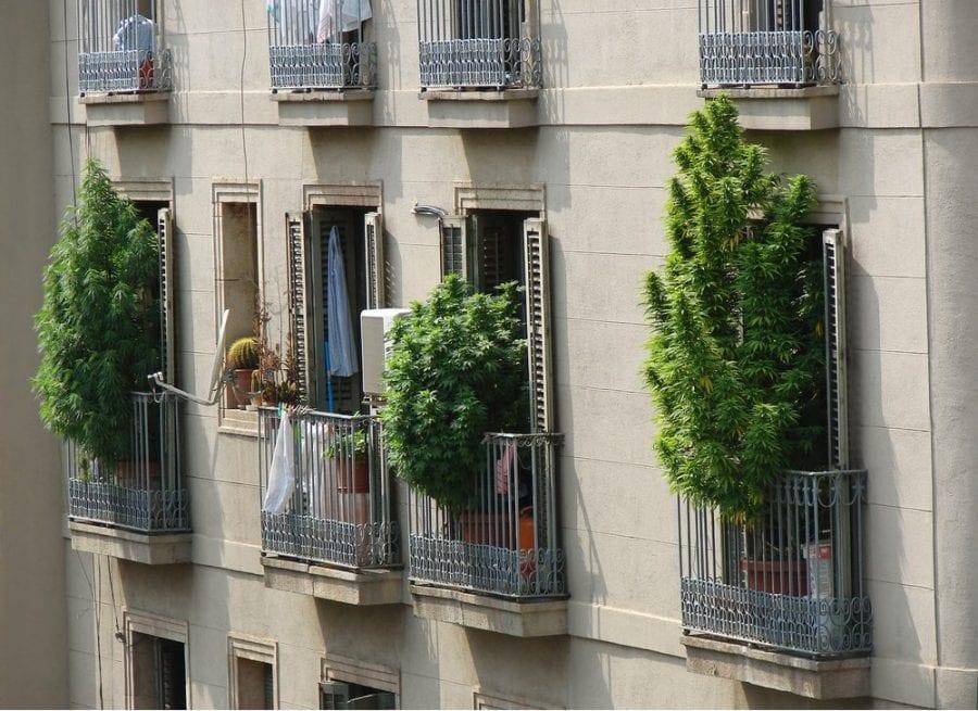 cannabis, Barcelona, Spain, legalization, prohibition, medical cannabis, recreational cannabis, Europe, Canada, research
