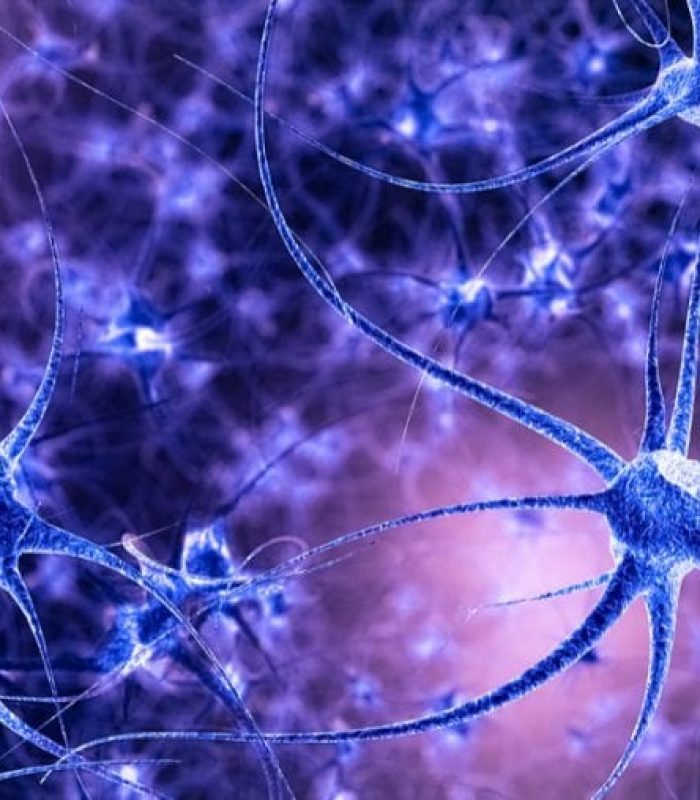 Is Cannabis Shrinking Your Hippocampus?