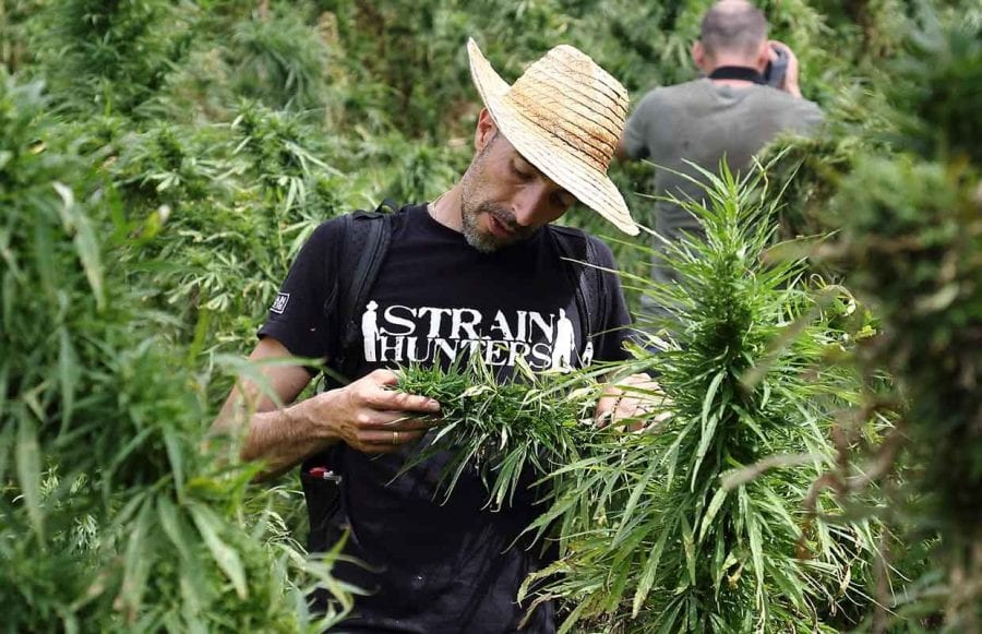 Strain Hunter James Franco in a field of cannabis