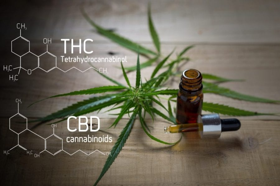 cannabis, medical cannabis, human clinical trials, BC, cancer, cancer treatment, nausea, vomiting, THC, CBD, chemotherapy side effects