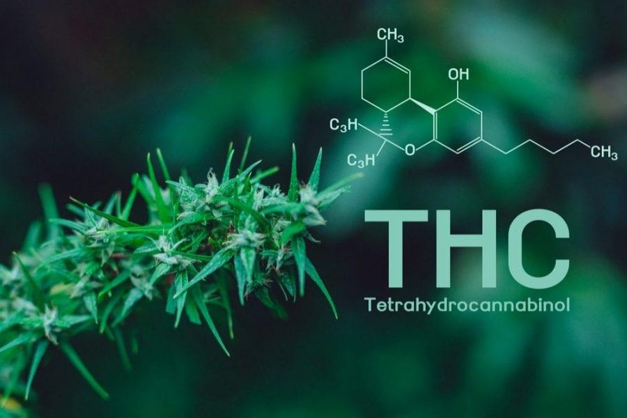 THC, high potency, cannabinoids, CBD, addiction, substance abuse, cannabis, medical cannabis, recreational cannabis, cannabis research
