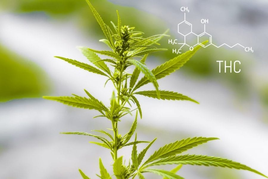 THC, THC potency, potency, CBD, cannabinoids, regulations, state legalization, USA, federal laws, prohibition, medical cannabis, cannabis research, prescriptions, epilepsy, cancer