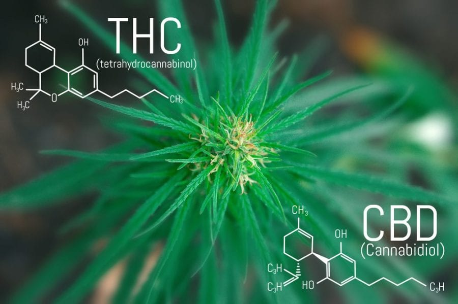 CBD, THC, balance, ratio, cannabis, cannabis research, healing, medical cannabis, recreational cannabis, cannabinoids