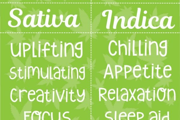 comparison chart of indica vs sativa