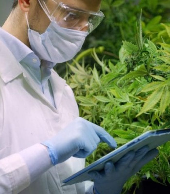 'You Can't Patent A Plant' Is Not A True Statement In America
