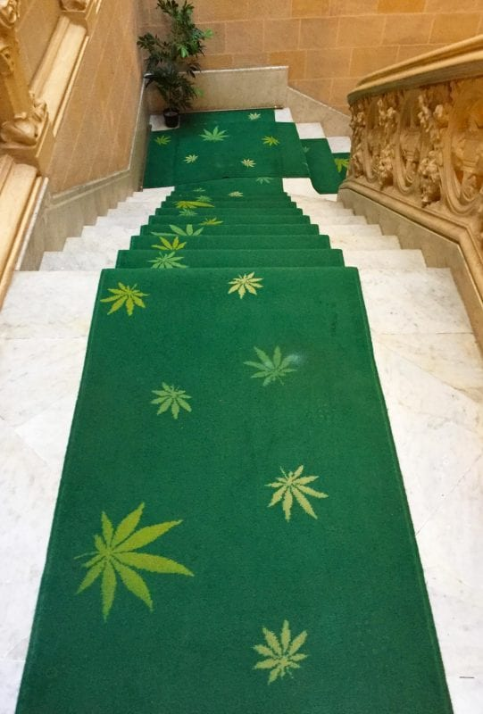 cannabis museum carpet