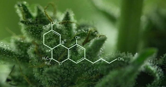 THC, cannabis, medical cannabis, recreational cannabis, cannabinoids, olivetol, legalization, health benefits