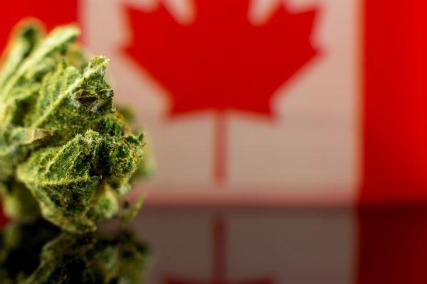 canada flag behind bud