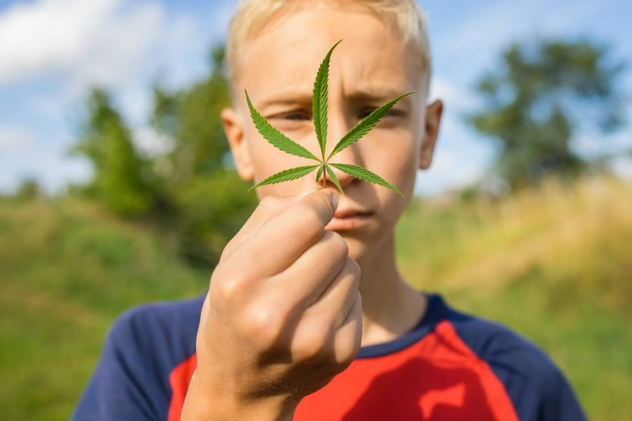 age of majority, cannabis, teen use, medical cannabis, black market, recreational cannabis, Quebec, brain development, Canada, legalization