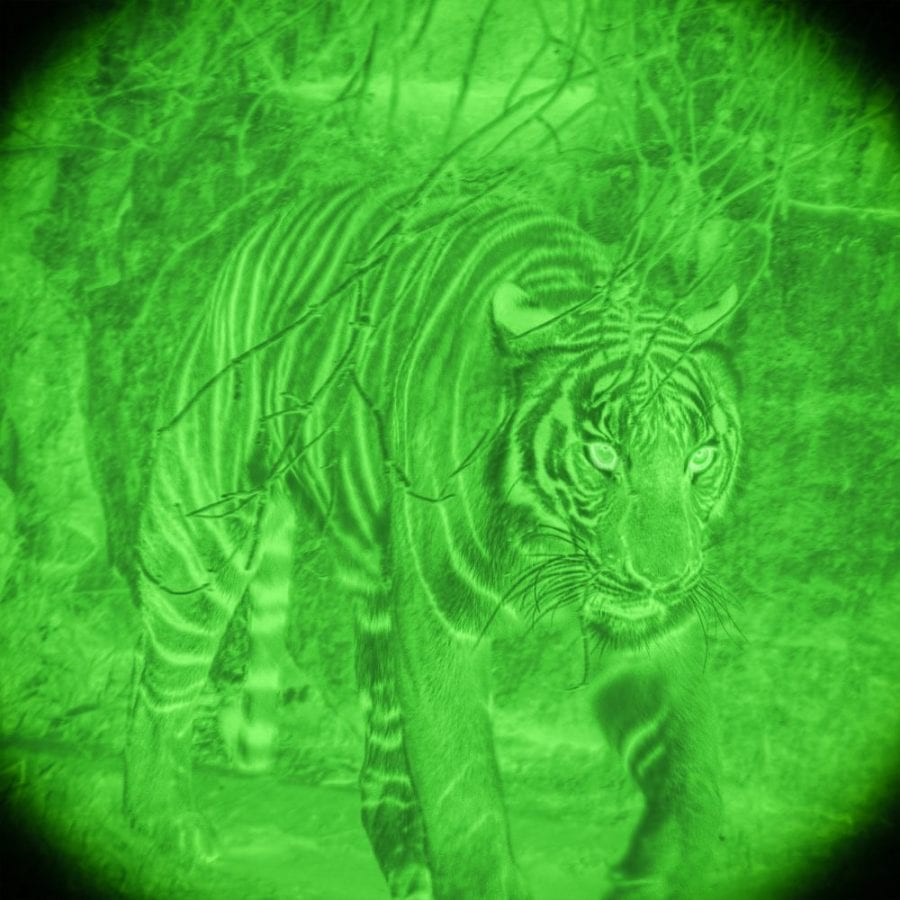 tiger as seen through night vision googles