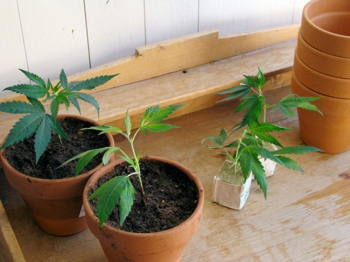 Colorado, USA, legalization, cannabis, medical cannabis, recreational cannabis, cannabis tracking, vendors