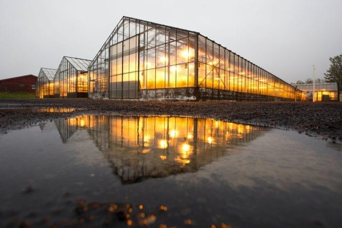 greenhouse light light pollution