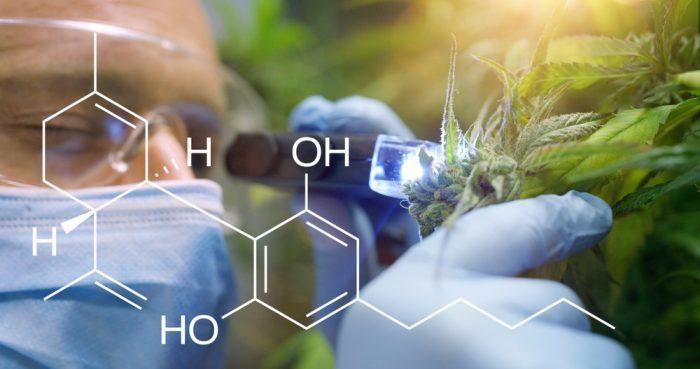 minor cannabinoids, cannabinoids, THC, CBD, CBG, CBC, CBG, CBN, endocannabinoid system, health benefits