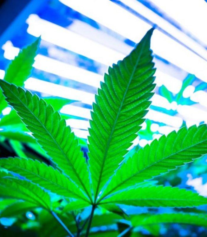 Home Grow 101: The Basics of Cannabis Cultivation