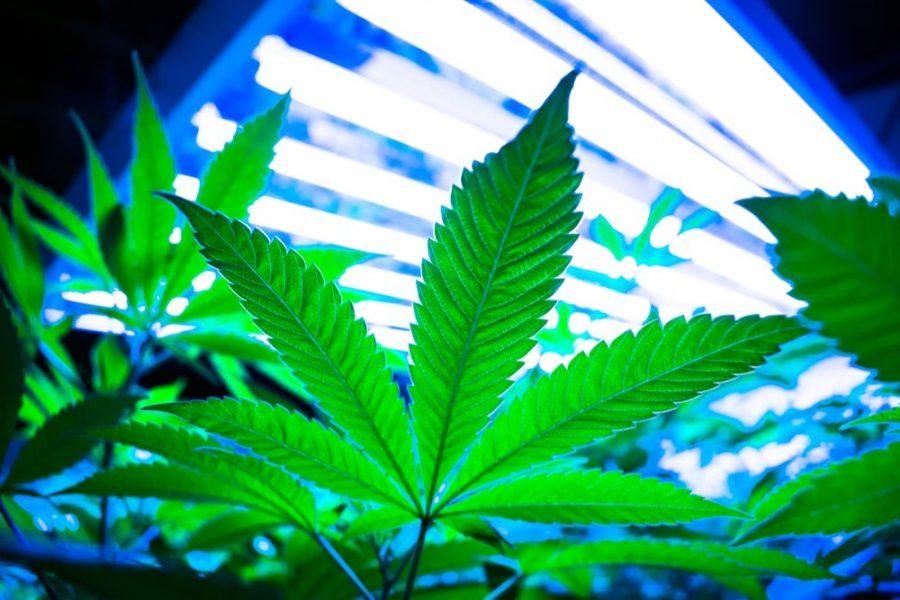 indoor grow