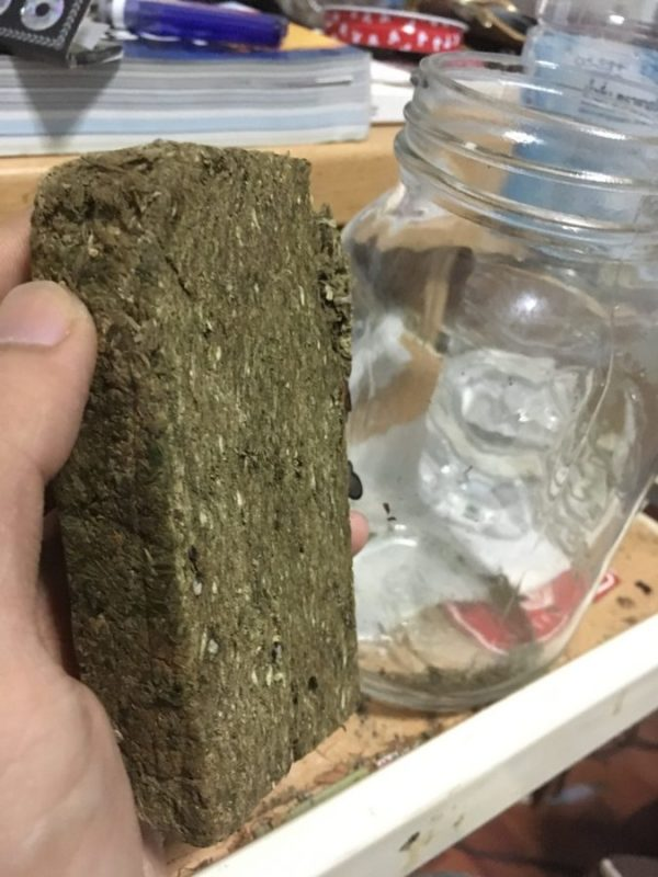 brick weed held up by hand