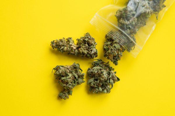 THC oil, bud, medical cannabis, cannabis, pain, THC, CBD, cannabinoid
