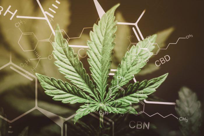 cannabis, CBG, CBN, CBD, THC, THCA, THCV, psychoactive, non-psychoactive, medicinal effects