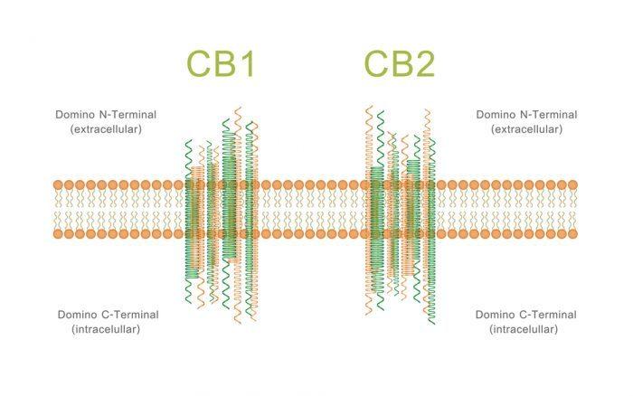 cannabis, medical cannabis, cannabinoids, synthetic cannabinoids, THC, CBD, CB2 receptors, CB1 receptors, molecular structure, crystalline structure