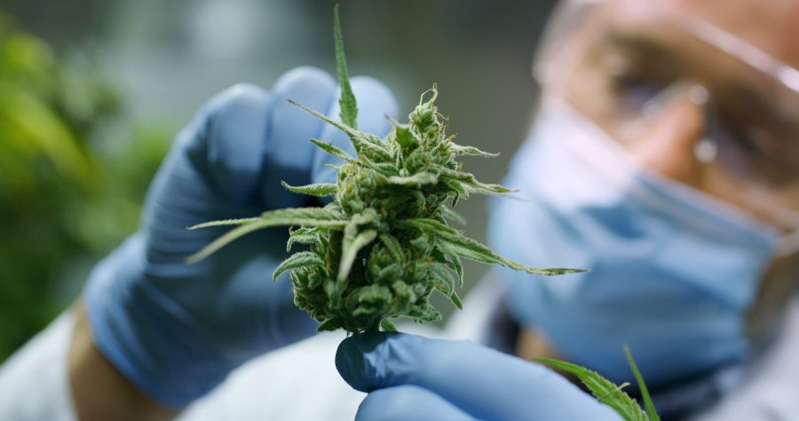 cannabis reports, front page news, cannabis, medical cannabis, research, medical research