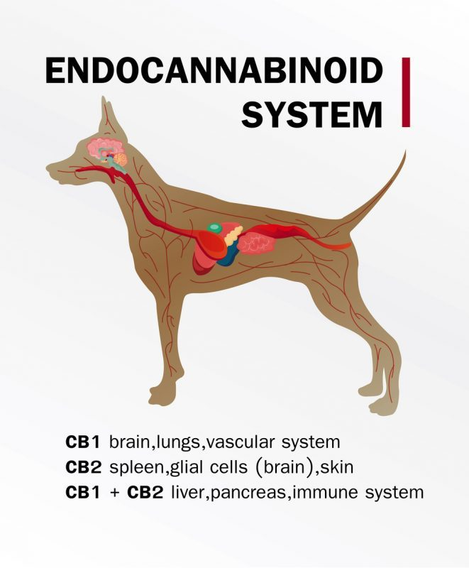 cannabinoids, veterinarians' lobby, Canada, legalization, CBD, CBD for pets, cannabis for pets, pet treatments, anxiety, rescue dogs, health benefits