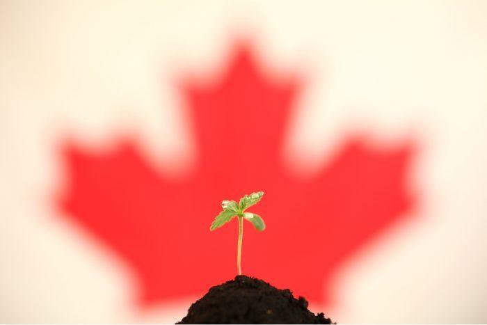 Big Business, cannabis, IRS, USA, legalization, prohibition, state legalization, Canada, Big Cannabis, taxes