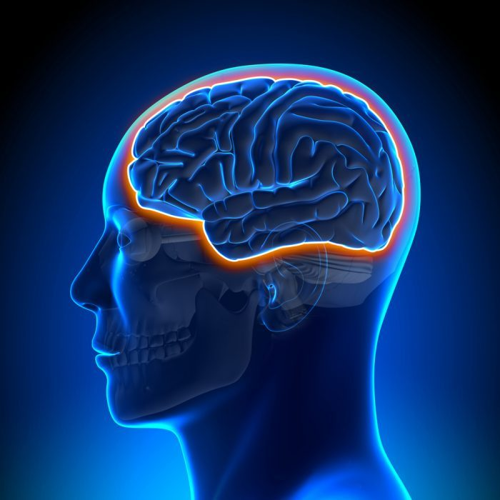 Blood Brain Barrier, BBB, CBD nanoparticles, nanocarriers, lipids, medical cannabis, cannabis medicine, CBD