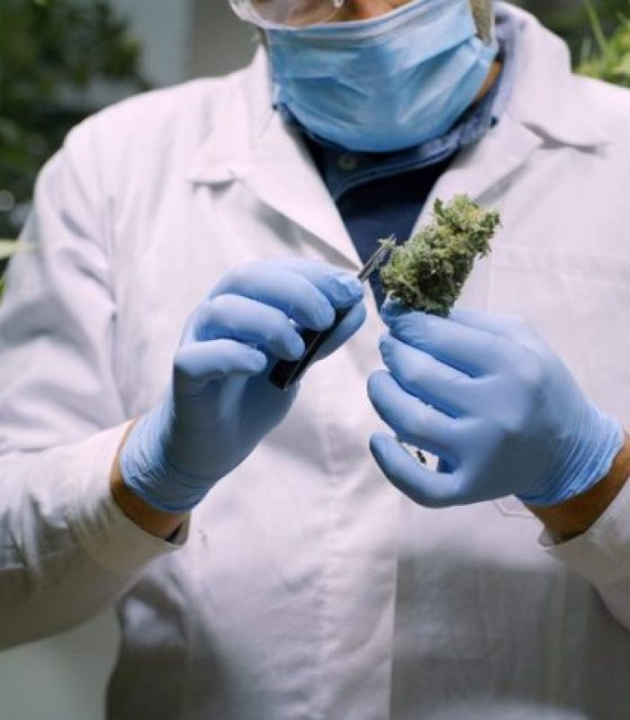 $9 Million Harvard Donation For Study Of Cannabis and Brain Disease