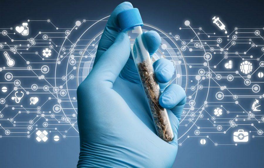 cannabinoids, synthetic cannabinoids, CB receptors, cannabinoid receptors, endocannabinoid system, health risks, toxicity