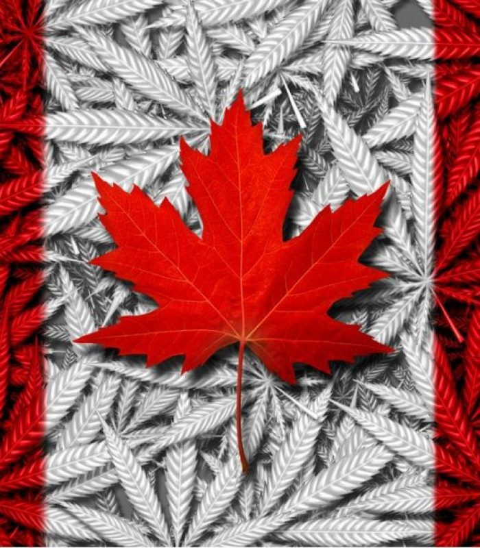 Edibles Will Soon Join The Chaos That Is Weed In Canada