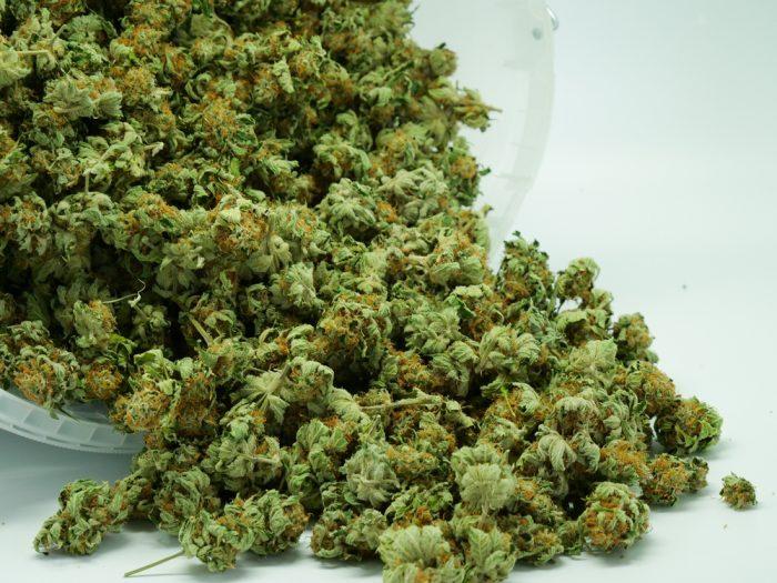cannabis, medical cannabis, recreational cannabis, THC, respiratory failure, legalization, death, THC overdose, prohibition, USA