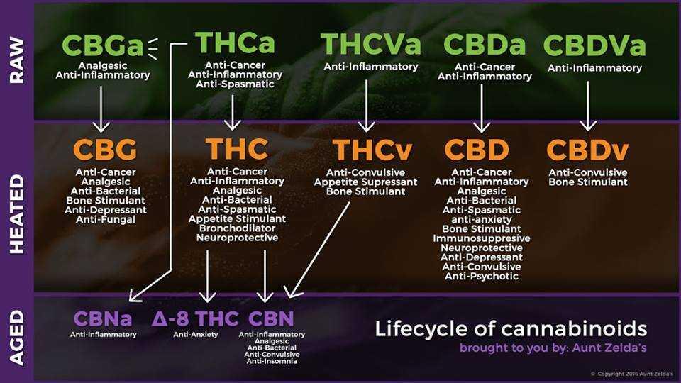 cannabinoid pathways, THC, THCV, CBD, raw cannabis, heated, decarboxylate