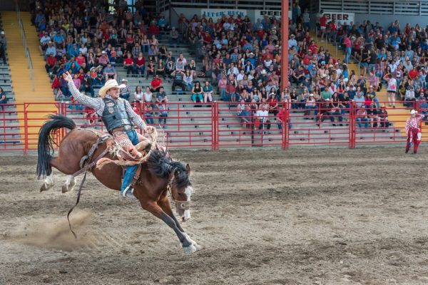 Calgary stampede, rodeo, cannabis, recreational, adult-use, medical cannabis, prohibition, cannabis legislations, legalized