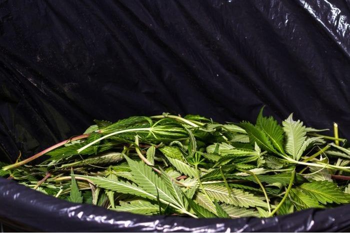 cannabis waste, cannabis, cannabis waste disposal, medical cannabis, recreational cannabis, cultivators, regulations, USA, legalization
