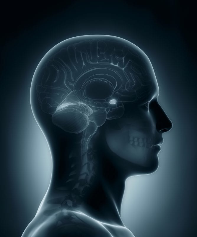 gender bender, men vs women, men, women, sex, gender, cannabis, THC, psychoactive, psychoactive effects, amygdala